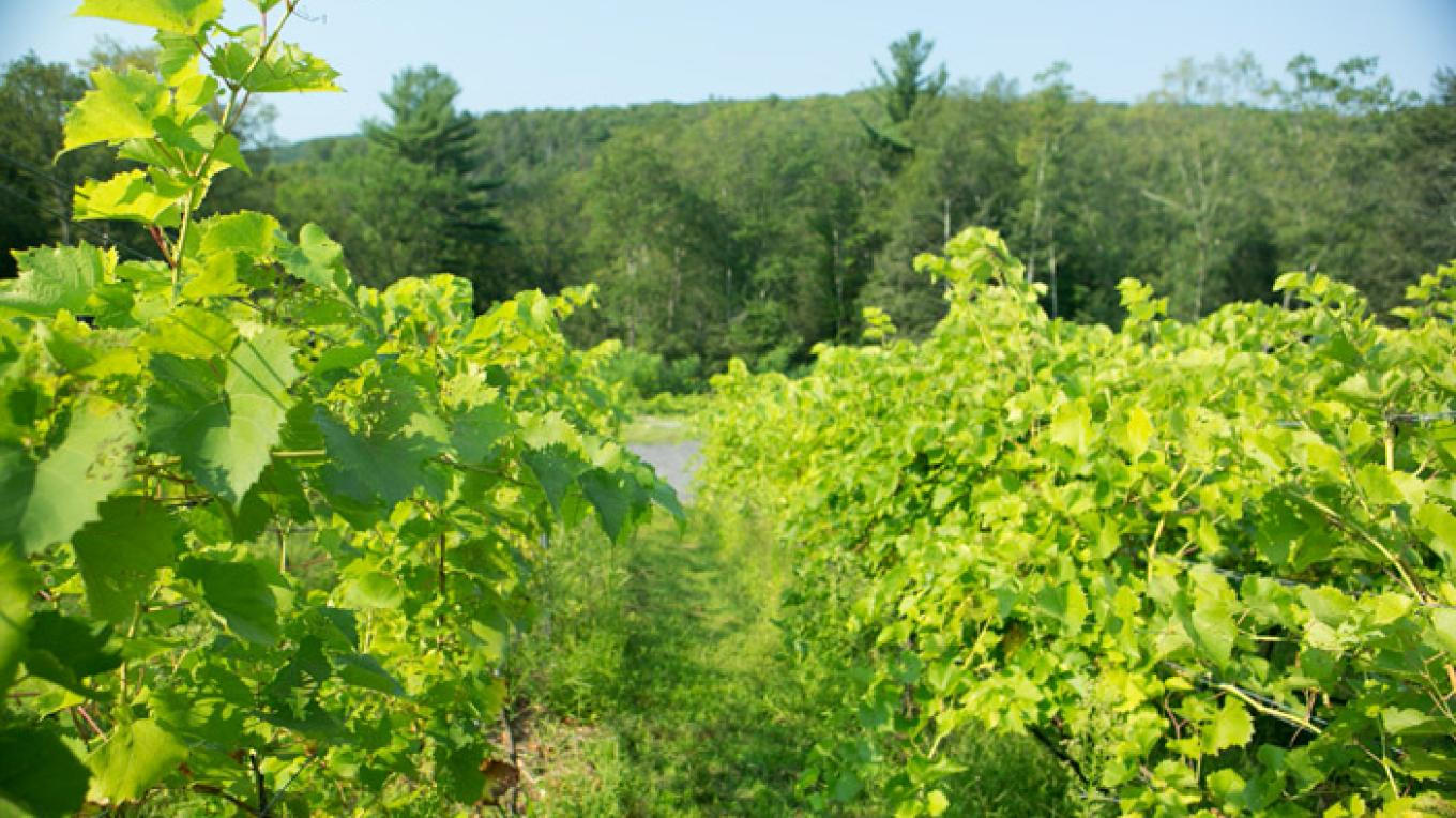 Mountain View Vineyard, Winery & Distillery is nestled in the beautiful mountainside of Neola, Pennsylvania. – Mountain View Vineyard