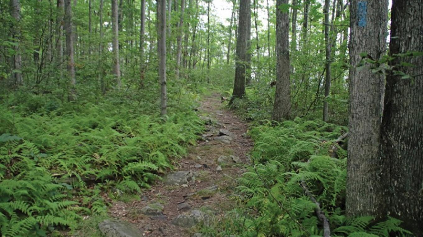 The blue trail at Shuman Point head through fern-full woods on the way to the lake. – Nancy J. Hopping