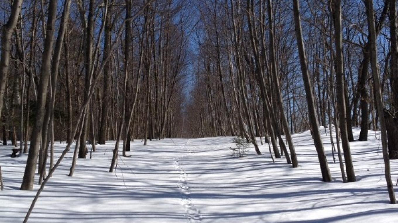 Porcupine Tracks – Photograph by: Phyllis Ianniello
