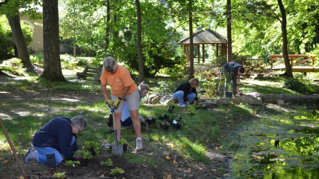 Volunteers work on a project to return native plants to The Pleasure Garden. – Liz Brandl