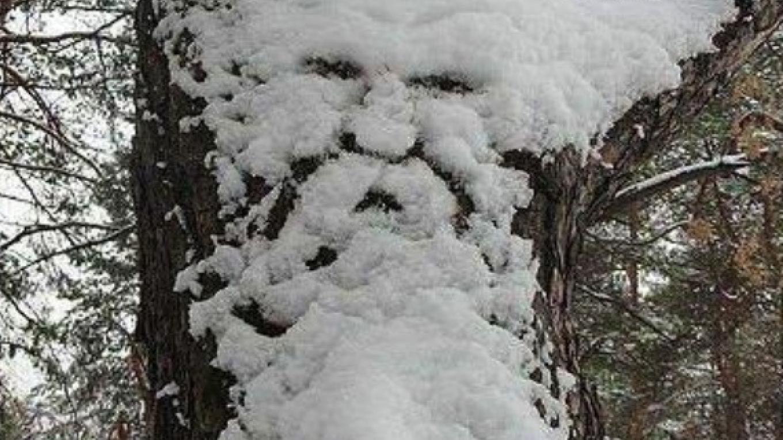Old Man Winter-Upper Woodland Trail – JoAnne Beliveau