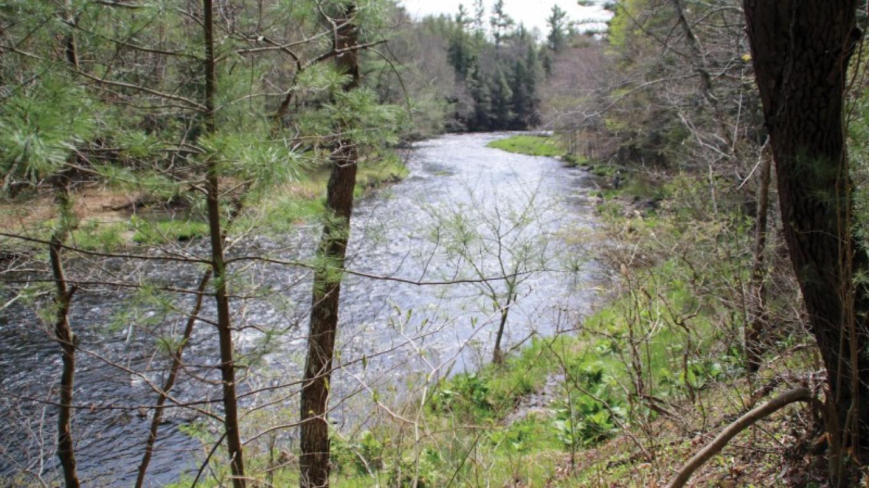 Tobyhanna Creek runs along the edge of Austin T. Blakeslee Natural Area. – Nancy J. Hopping