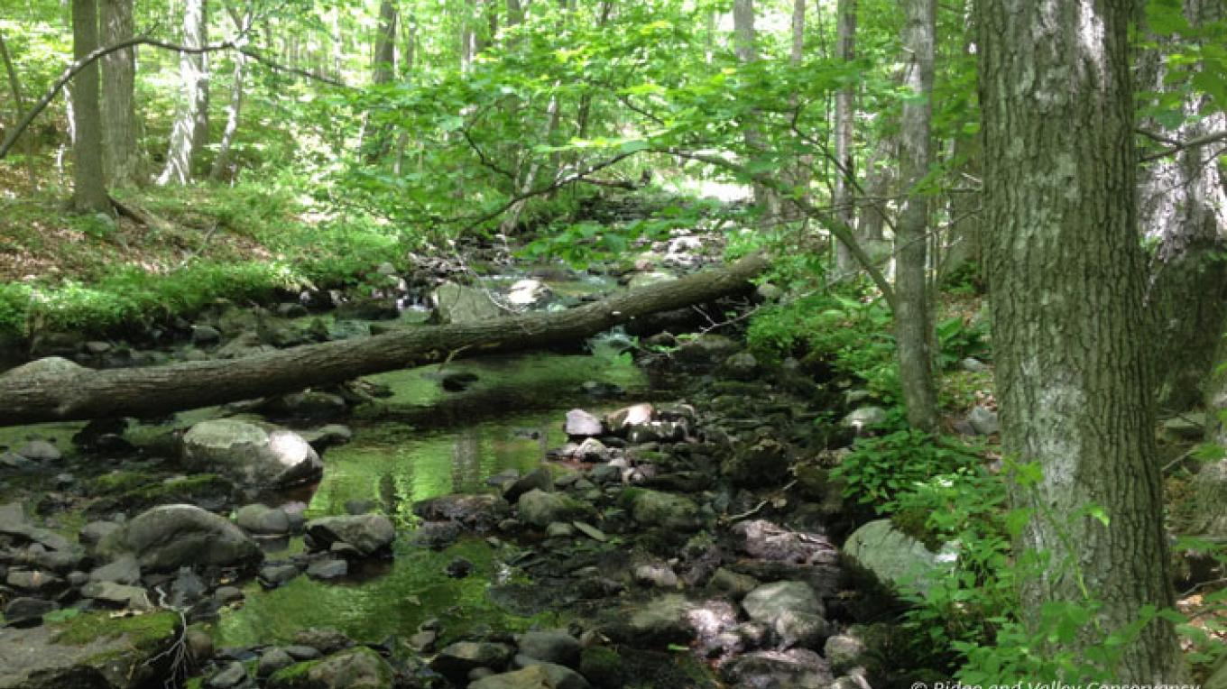 The forests of Blair Creek. – Photograph by: Blair Creek Nature Preserve