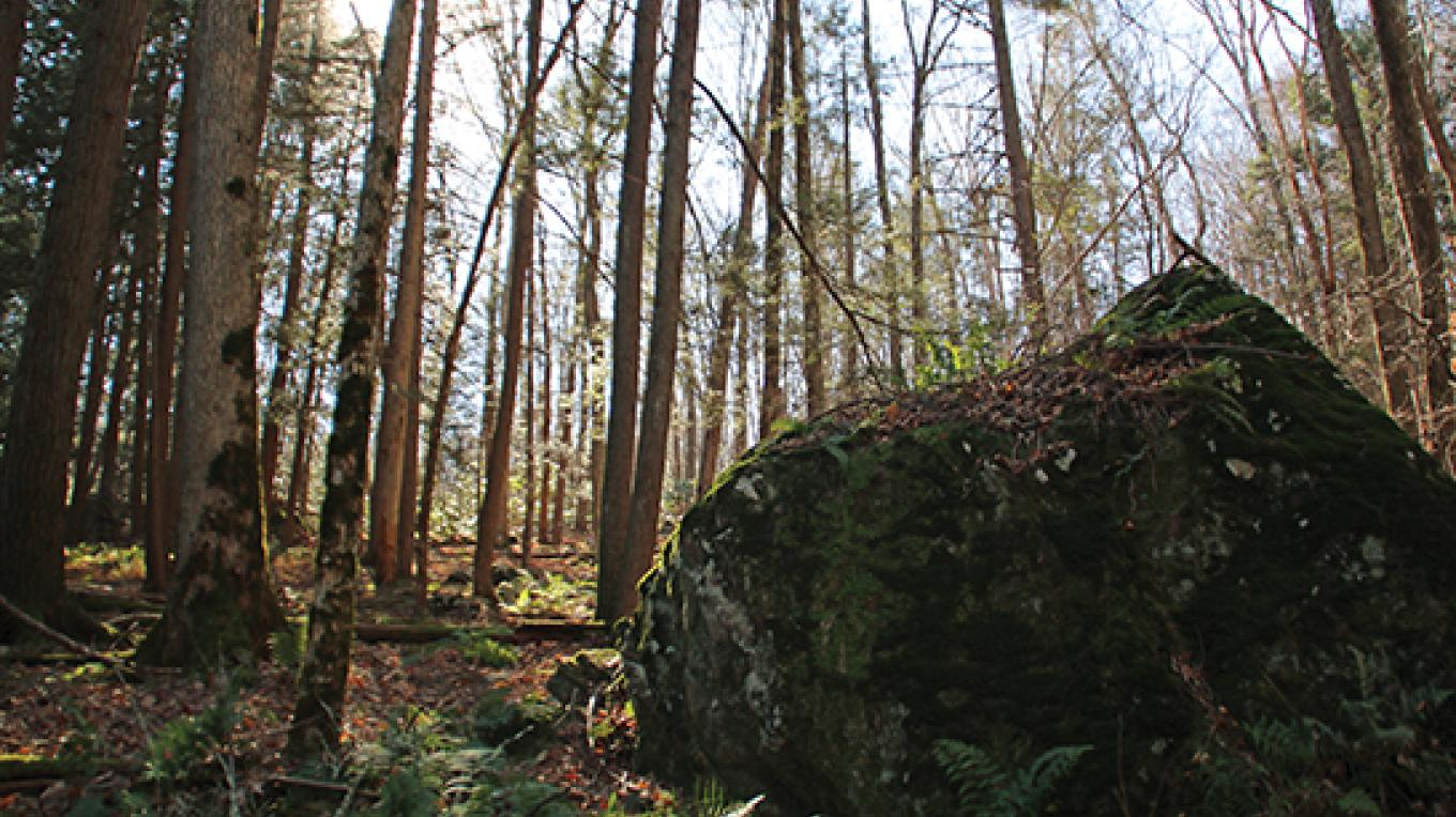 Ancient history is evident in the boulders at Zimmer Wildlife Sanctuary. – Nancy J. Hopping
