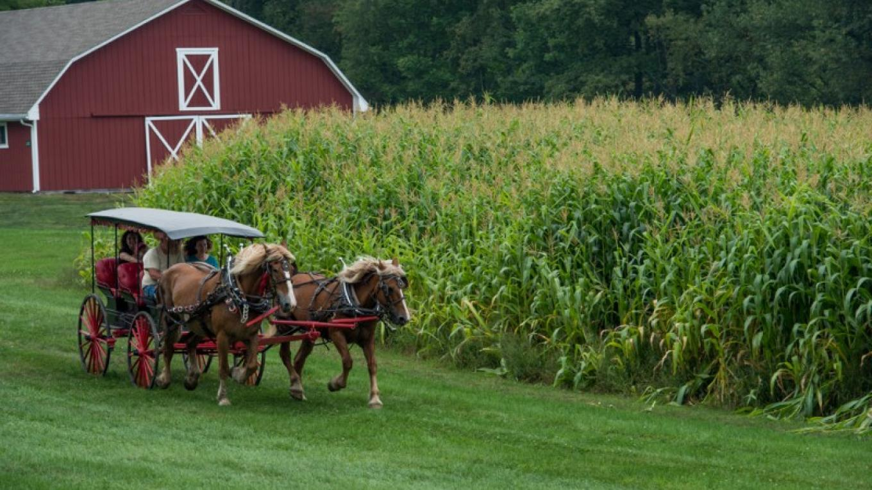 Bethel Woods Harvest Festival