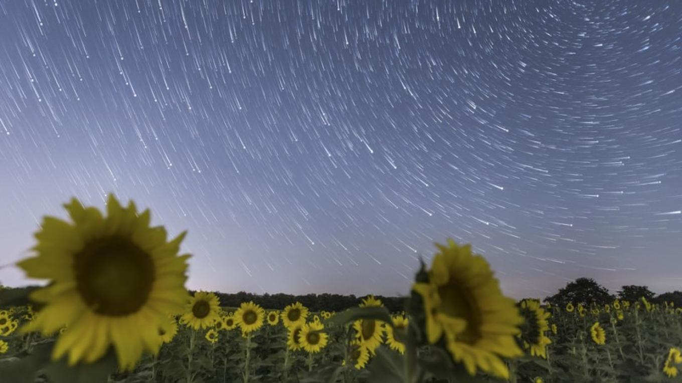 Starry Night Over the Sunflowers – Jason Gammbone