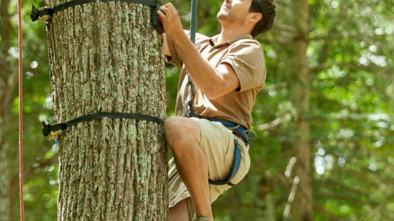 Pocono TreeVentures offers TruClimb tree based climbing walls. – David Coulter
