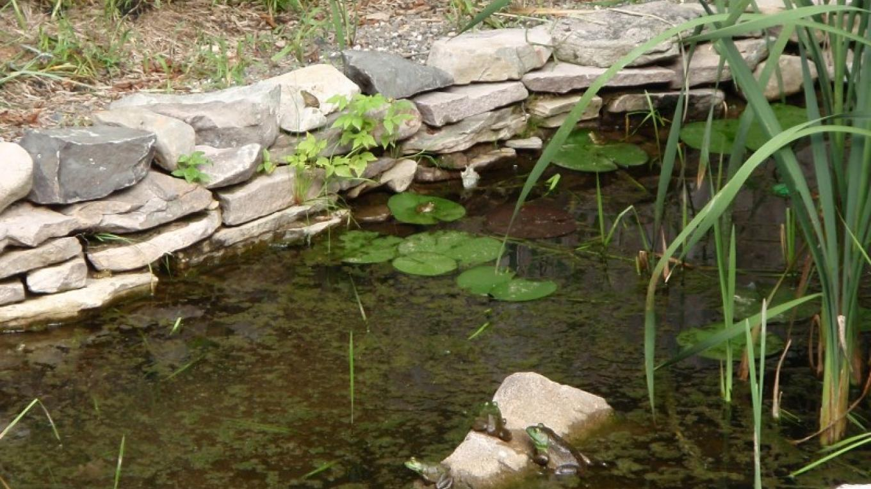 Serenading frogs! – D. Davies