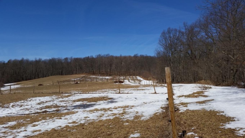 Springtime in the upper vineyward – Diane Tees