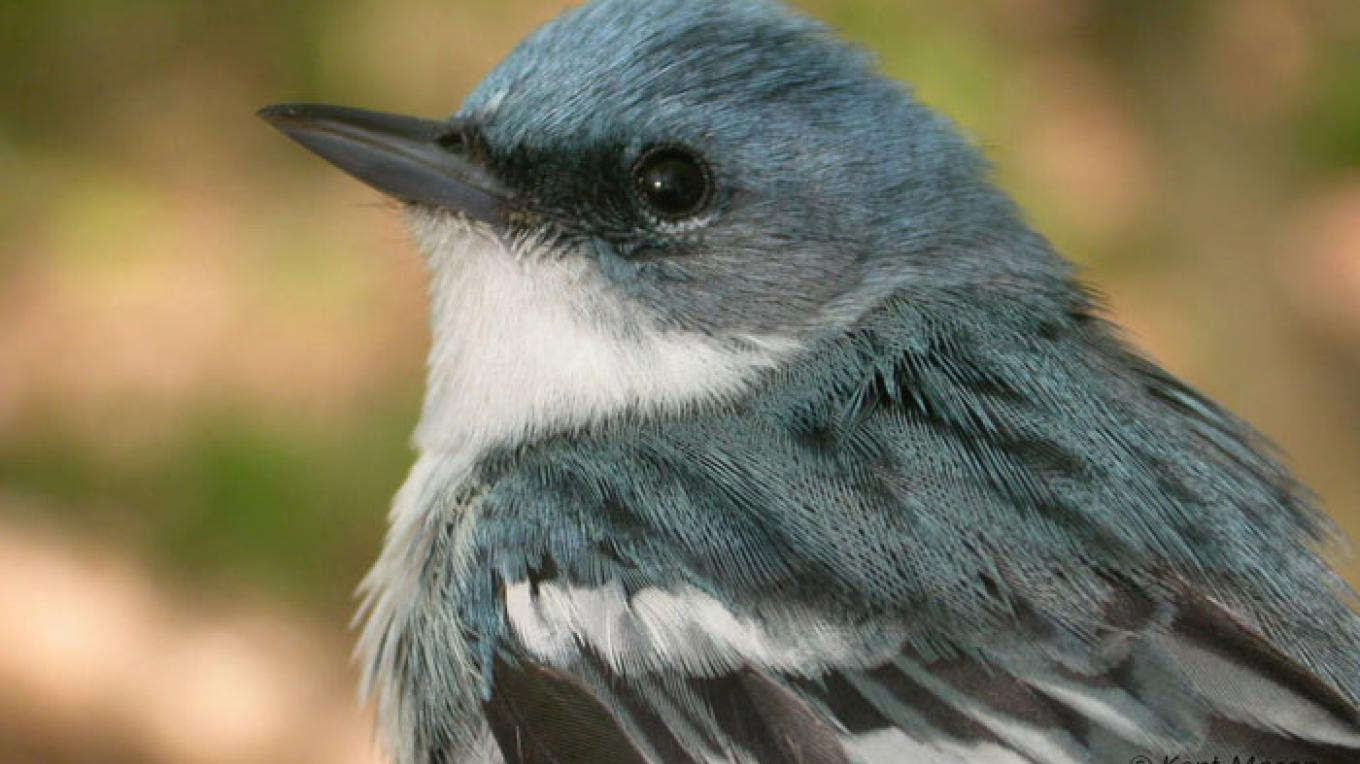The preserve's forests are home to breeding Cerulean Warblers and many of the nesting warblers that make the Kittatinny Ridge a well-known birding location. – Photograph by: Blair Creek Nature Preserve