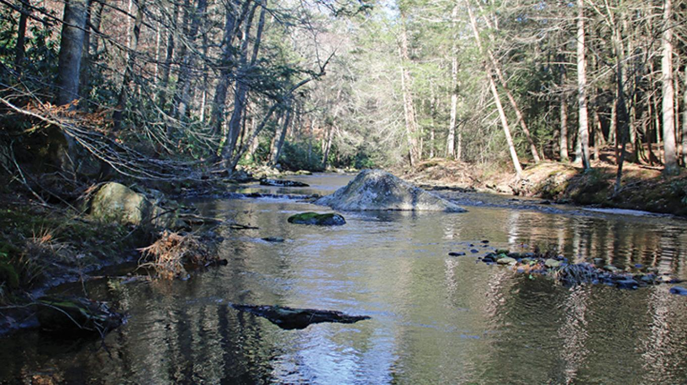 A hike through the woods is rewarded with a peaceful view of Brodhead Creek. – Nancy J. Hopping
