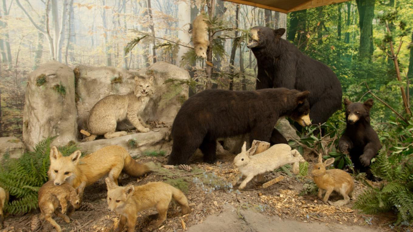 The Pennsylvania Wildlife Exhibit displays animals native to Pennsylvania. – David W. Coulter