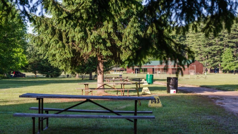 Wooded sites – Lisa Lander