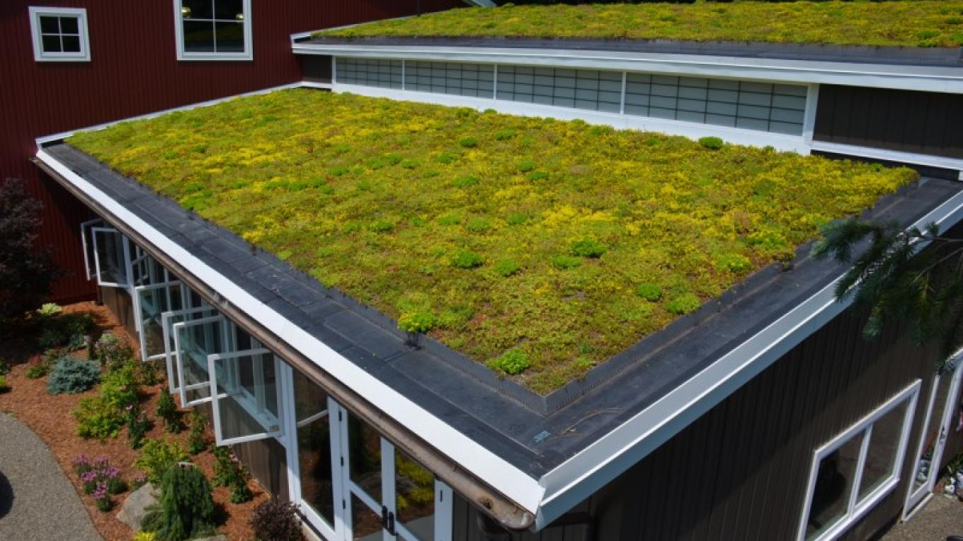 Green Roof – Greg Lofaro