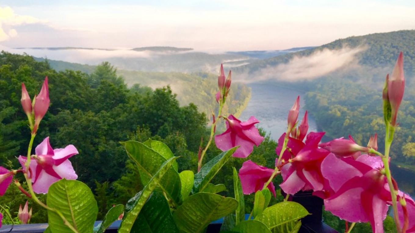 Mandevilla on the front deck overlooking the Upper Delaware River – Kurt Kreider