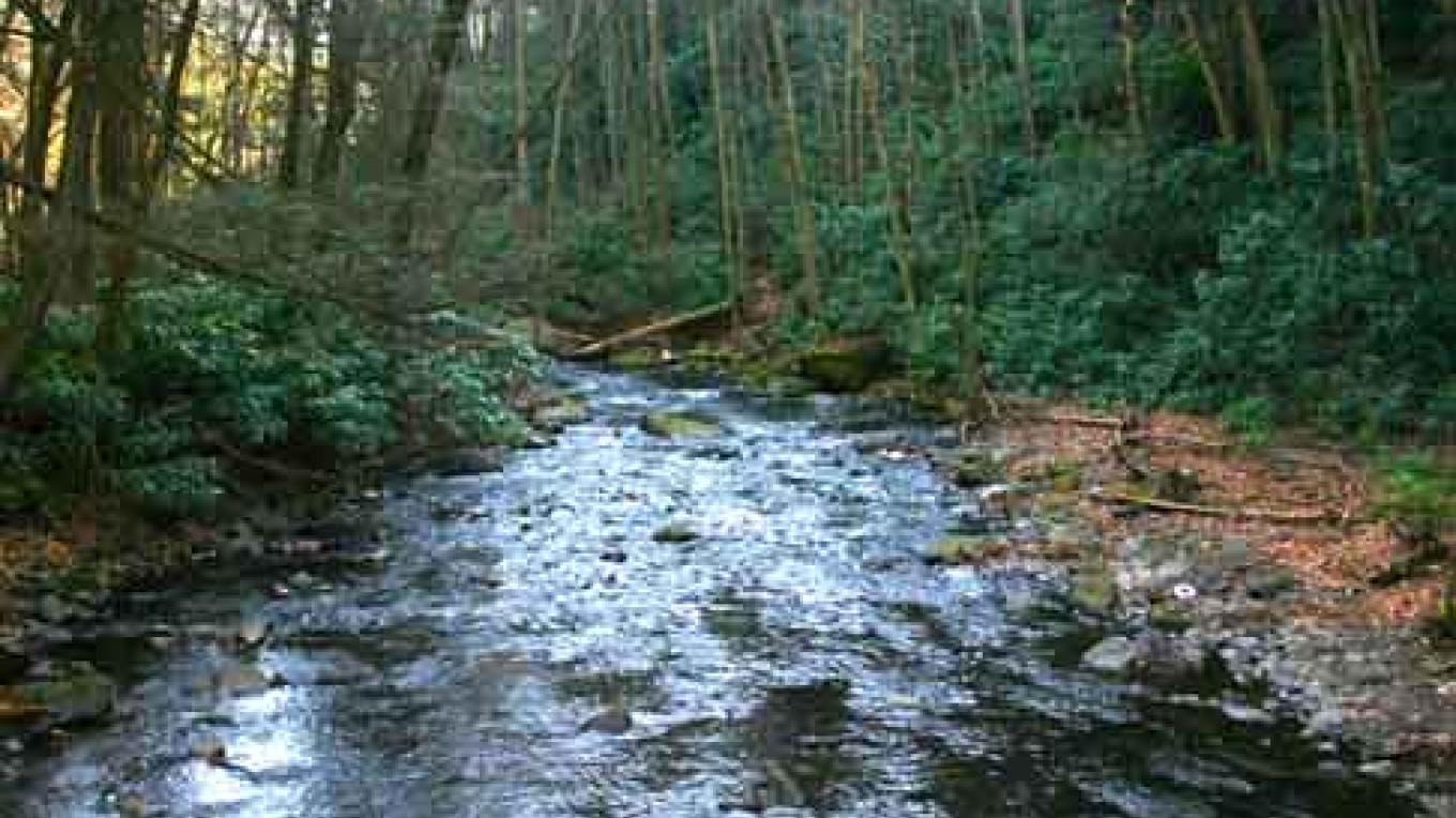 Dingmans Creek flows through a beautiful Hemlock and Rhododendron forest. – National Park Service