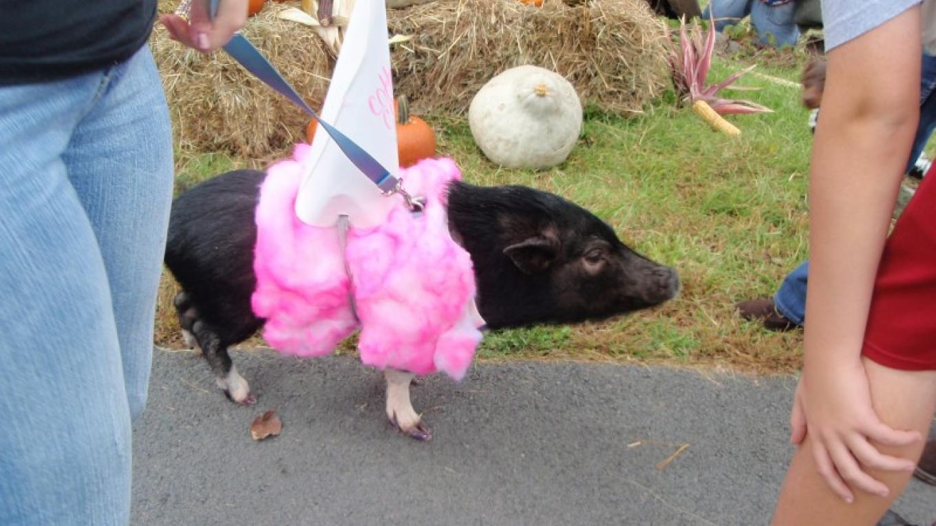 Pumpkin Fest Halloween Costume fun...even the animals dress up! – D. Davies