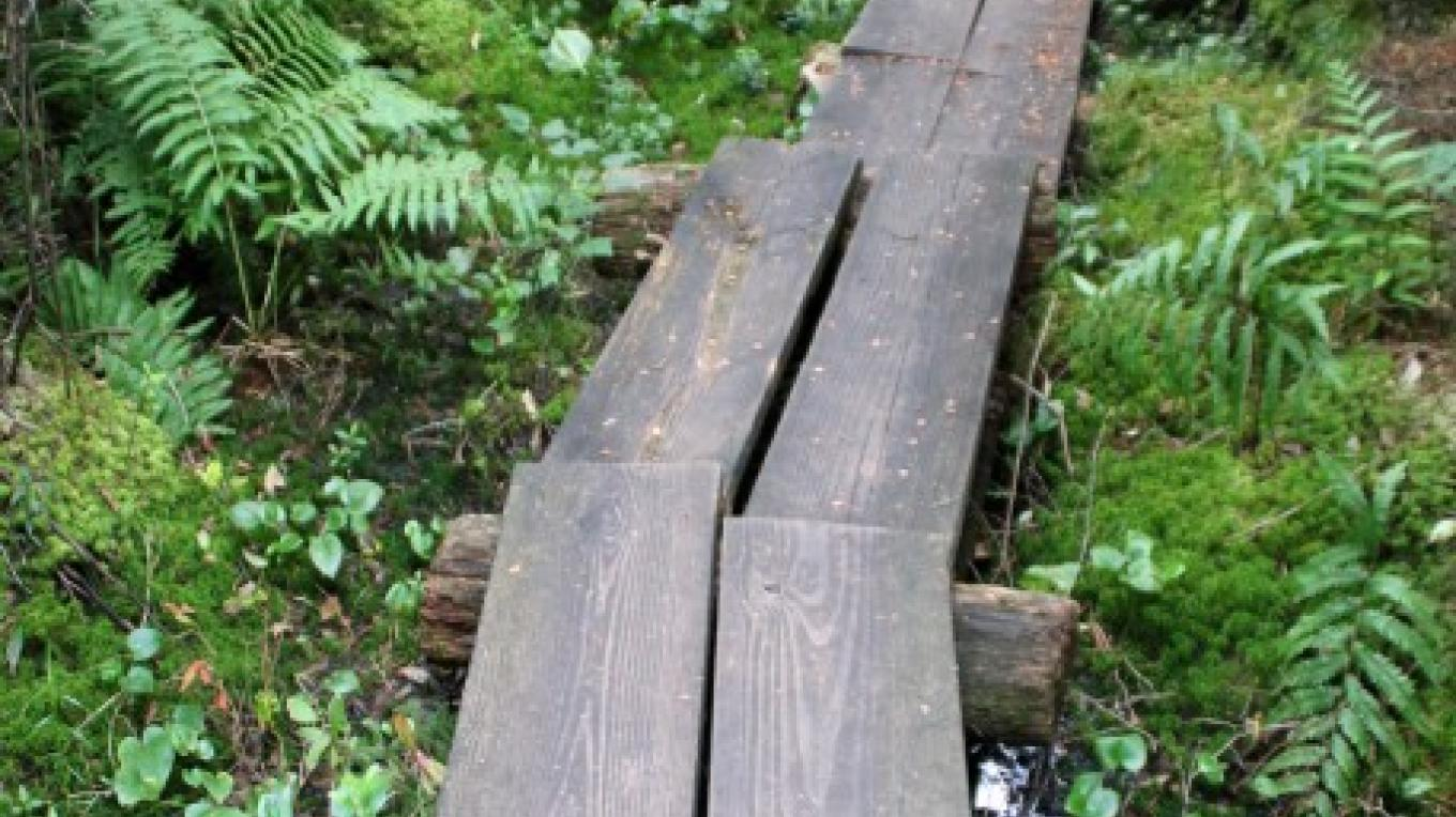 Stay on the plank boardwalk, which marks the way through the fragile, swampier trail sections. – Nancy J. Hopping