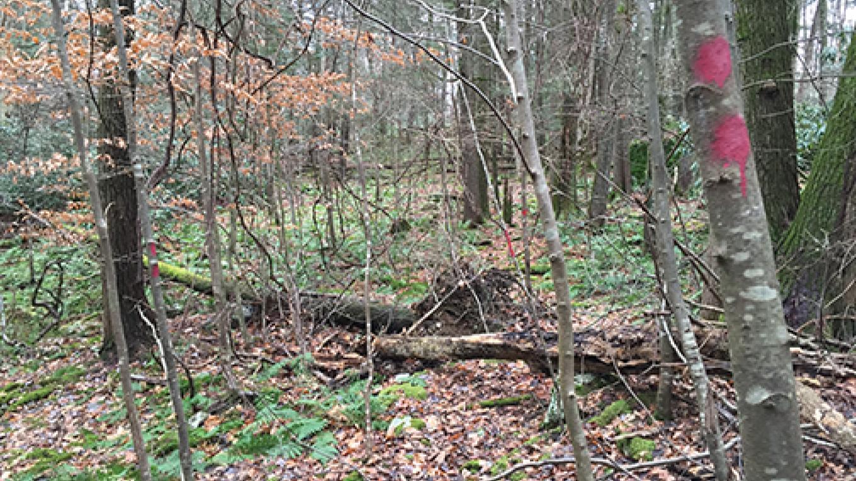 Red blazes mark the trail at Zimmer Wildlife Sanctuary. – Nancy J. Hopping