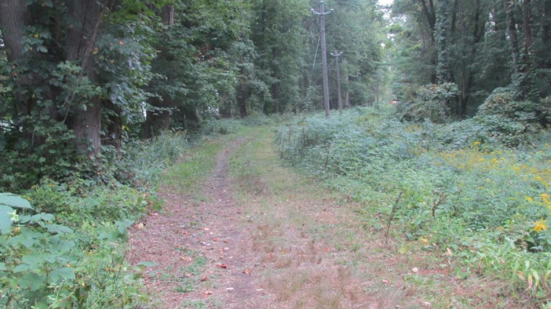 The towpath near Ferguson Lane in Wurtsboro in spring – Kerron Barnes