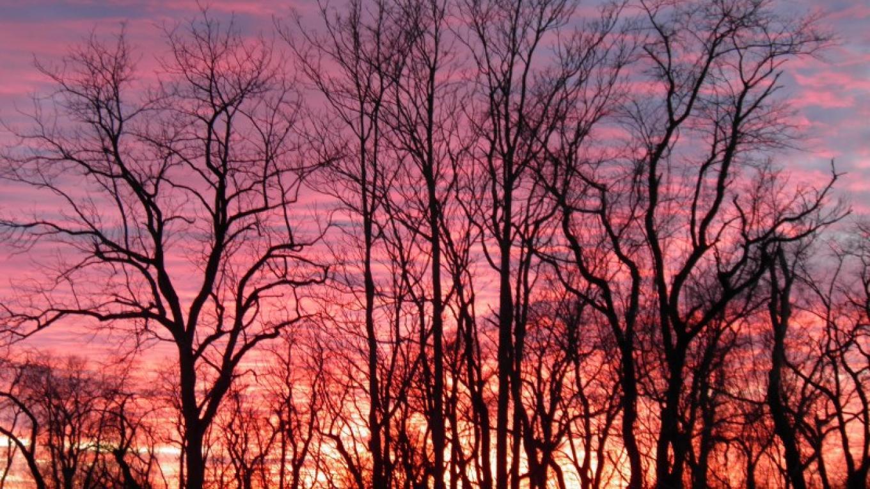 Sunset in Winter at the NJ Audubon Wattles Stewardship Center – John Parke