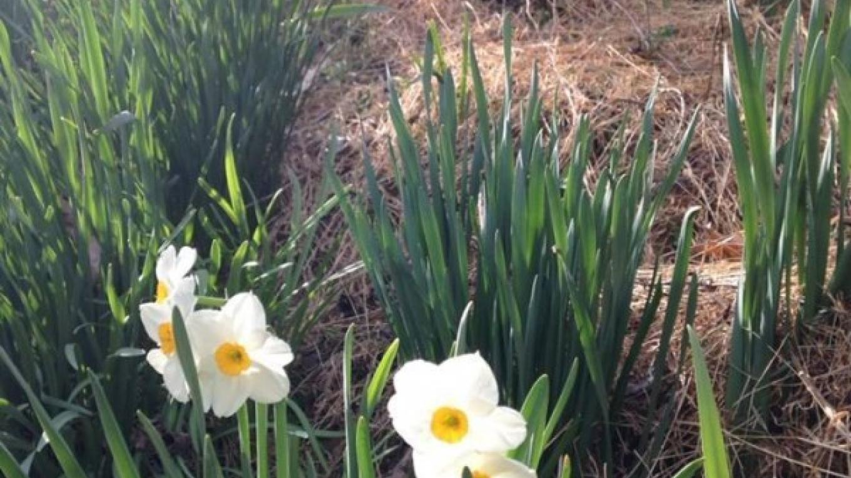 Spring Flowers – Corey Tierney