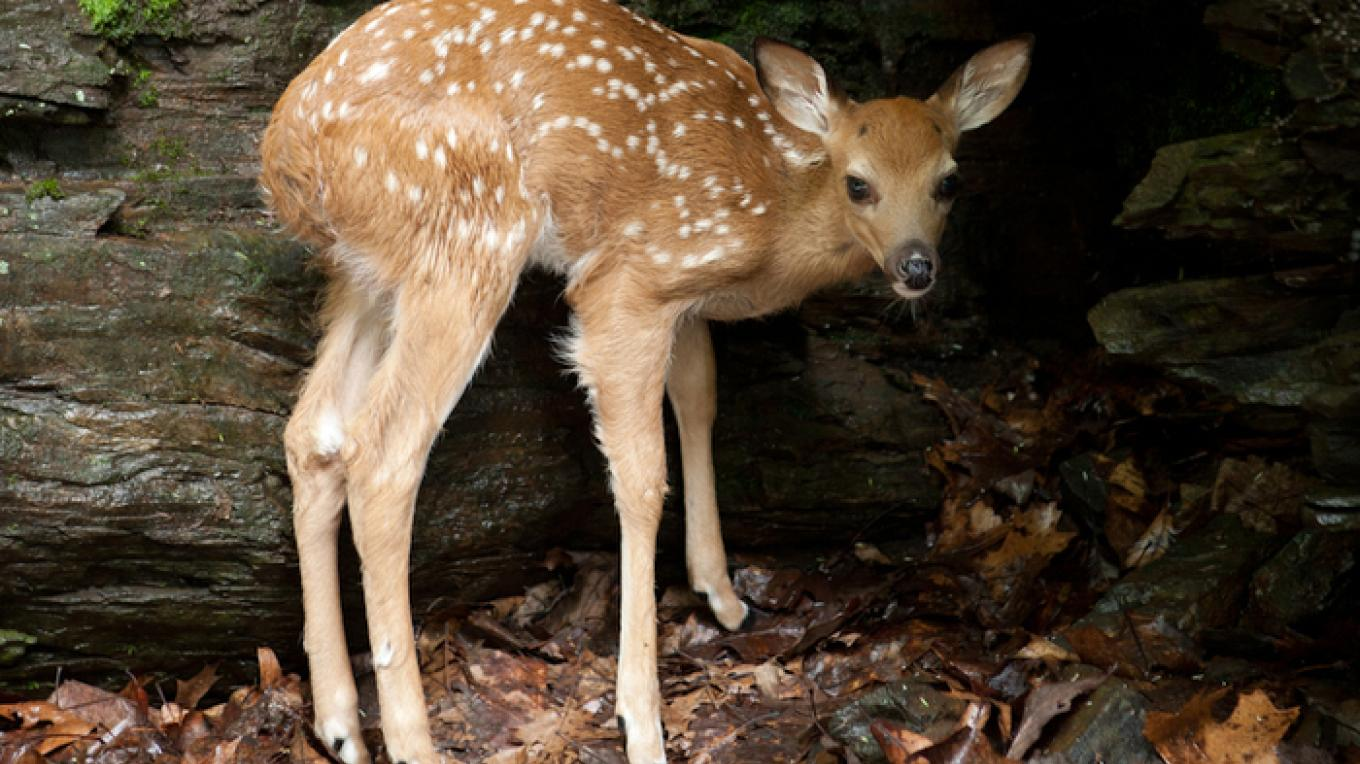 You may get lucky and see fawns in the spring. – David W. Coulter