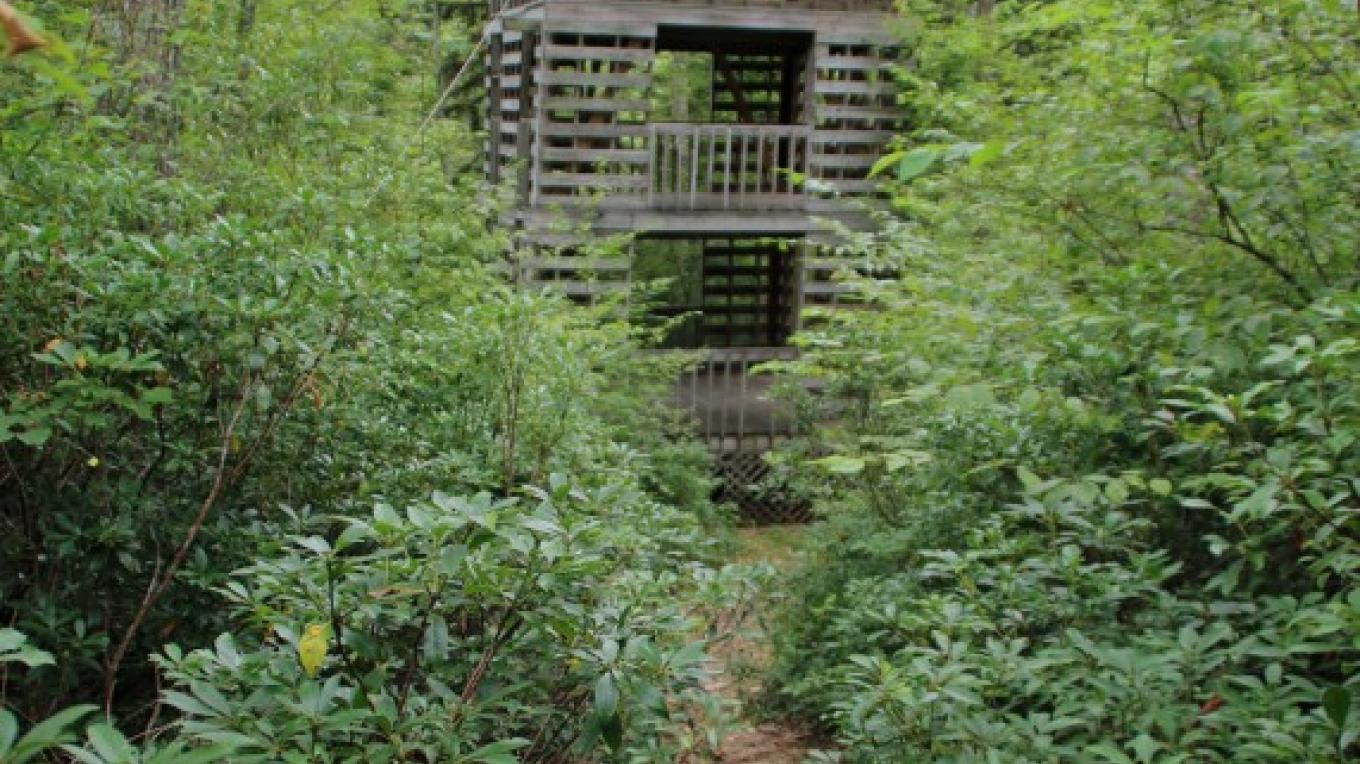 Tower for viewing wildlife—best in winter when the vegetation is not so thick. – Nancy J. Hopping