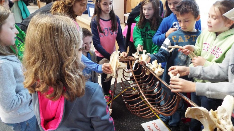 Bear Skeleton in the EcoZone – PEEC Staff Photo