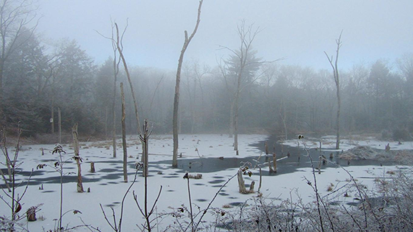 A wintry wetland scene outside of headquarters. – National Park Service
