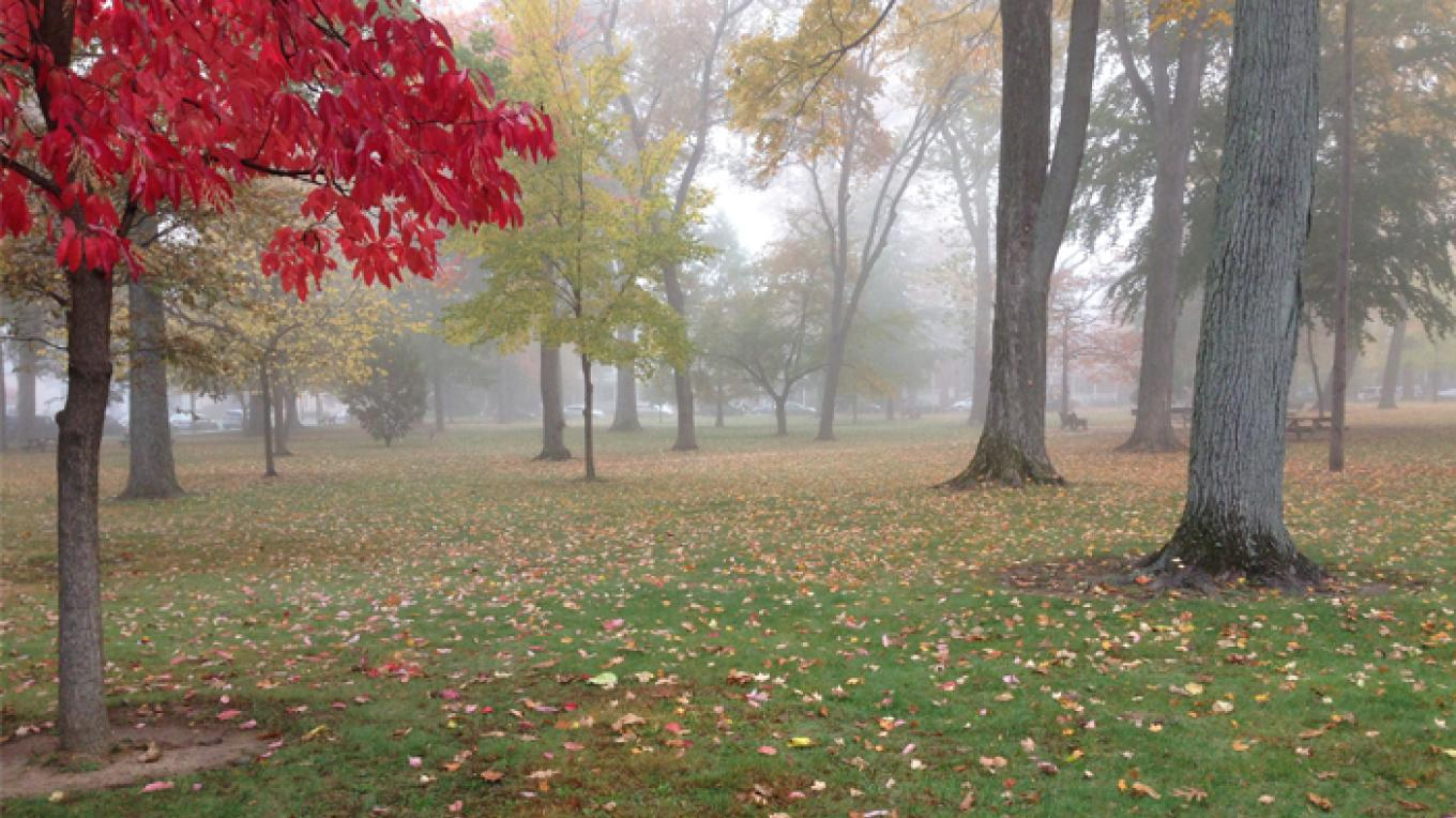 Garret Wall Park from Hardwick Street, on a foggy fall day. – Patricia Butler