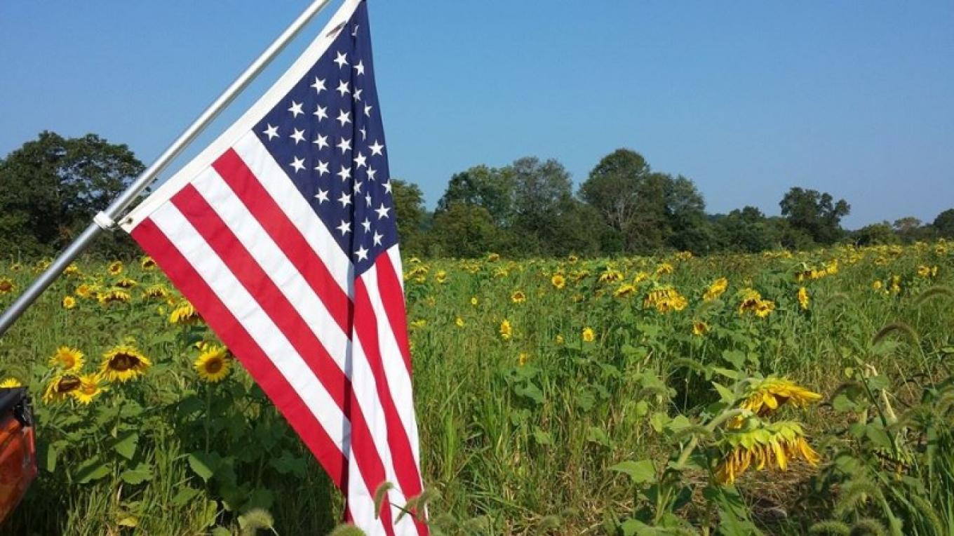 Flag over Sunflower Field – Raj Sinha
