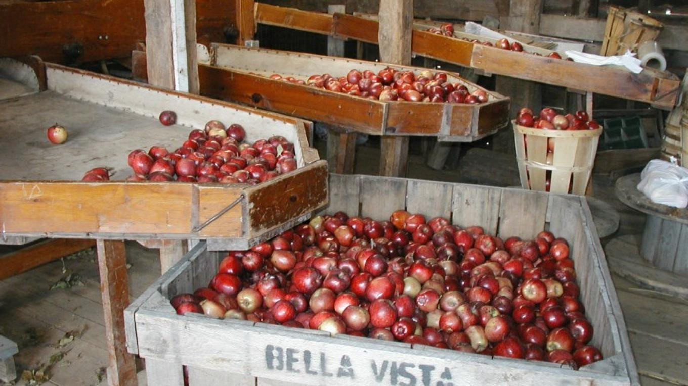 Grading apples for our retail store – Elvern Farms