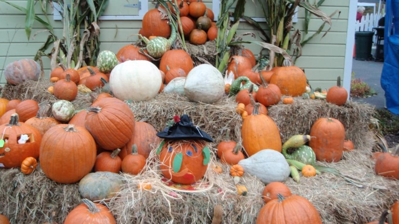 October is Pumpkin Fest! in nearby Barryville, NY – D. Davies