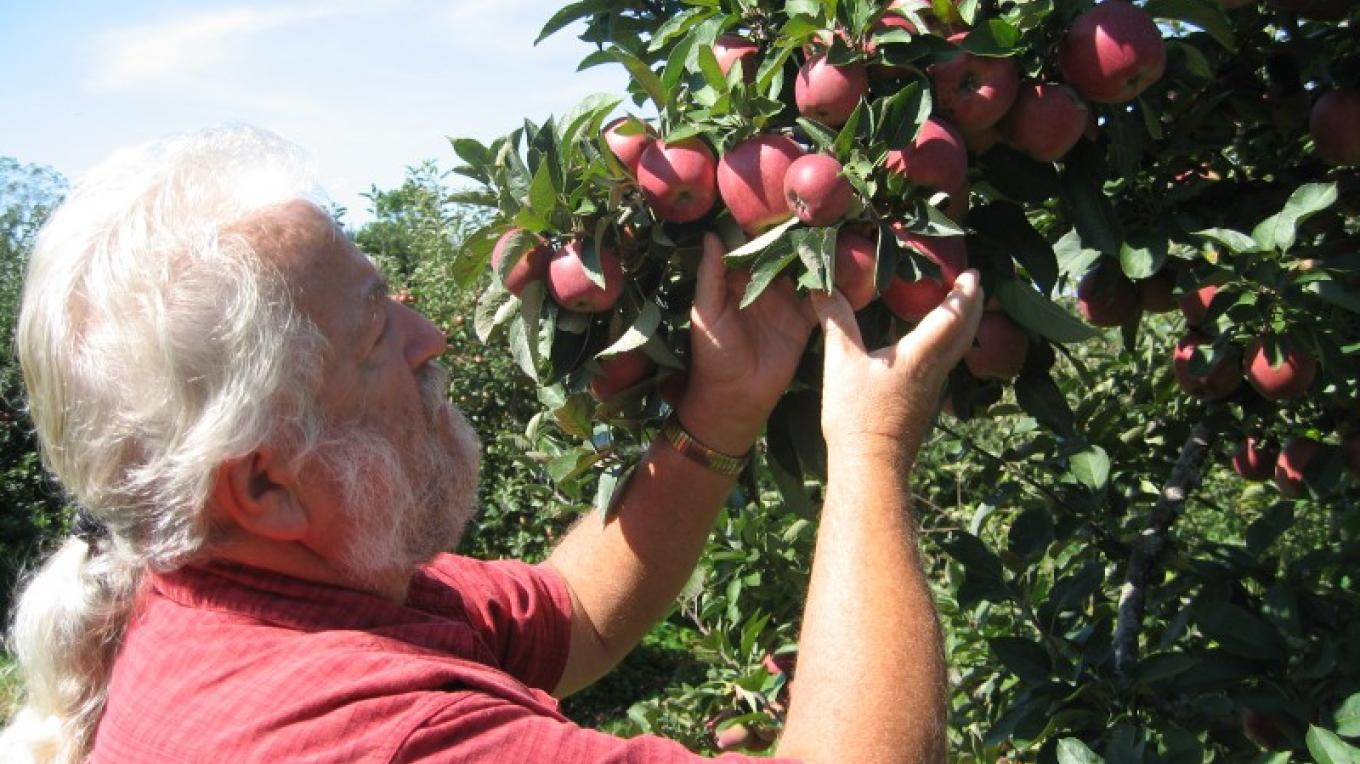Matty Matarazzo checking the apple harvest at Four Sisters winery. – Valerie L. Tishuk