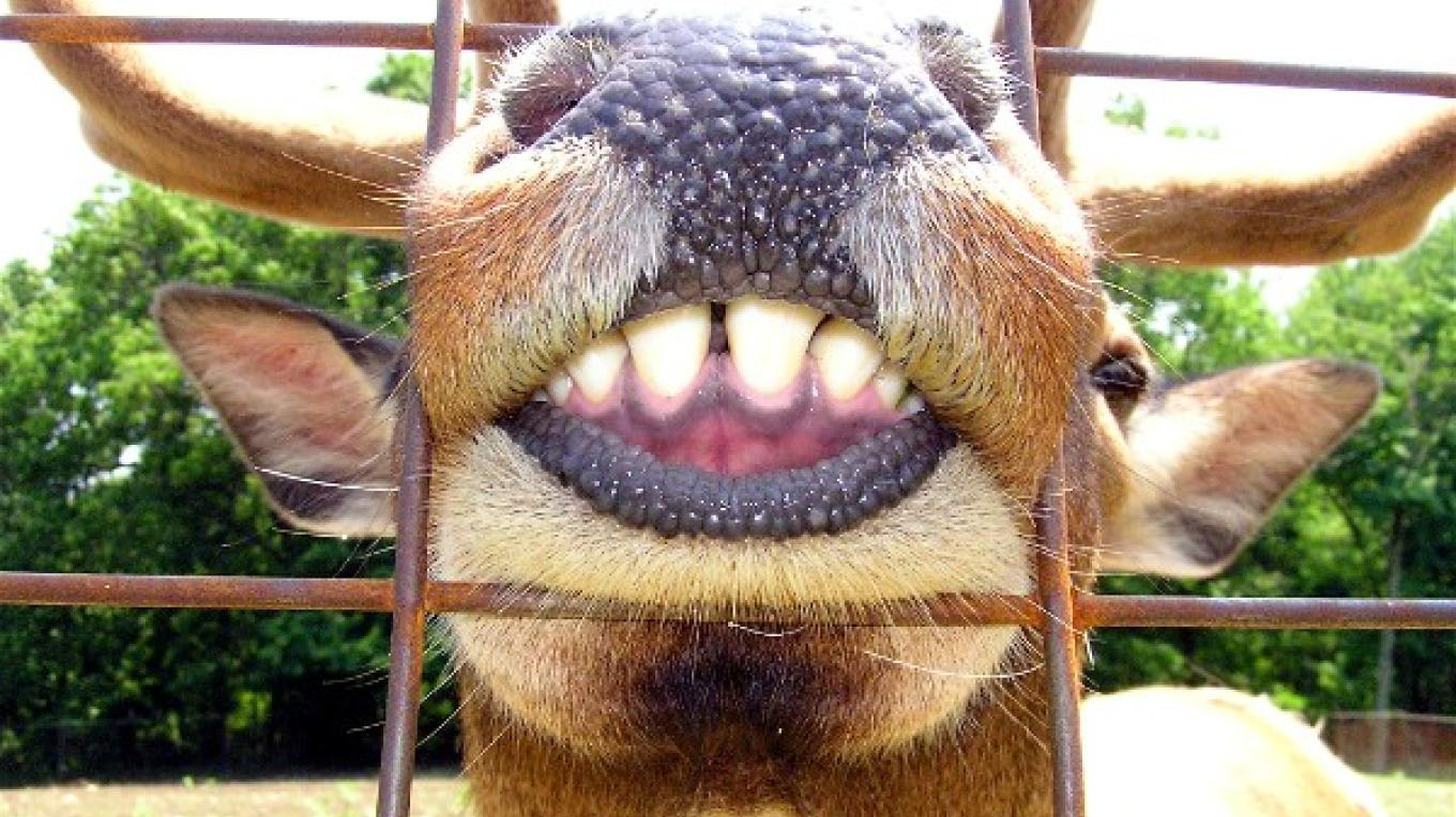 Did you know an elk can smile? – Karen Talasco
