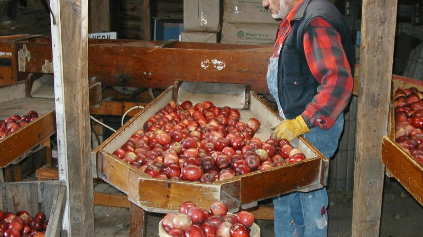 Johnny Appleseed hard at work – Elvern Farms