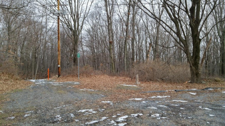 Buss Street Trail Head – Thomas Petrucci