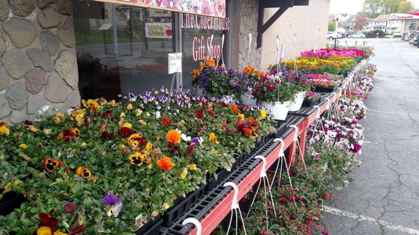 Annuals and perennials throughout the spring – Elvern Farms