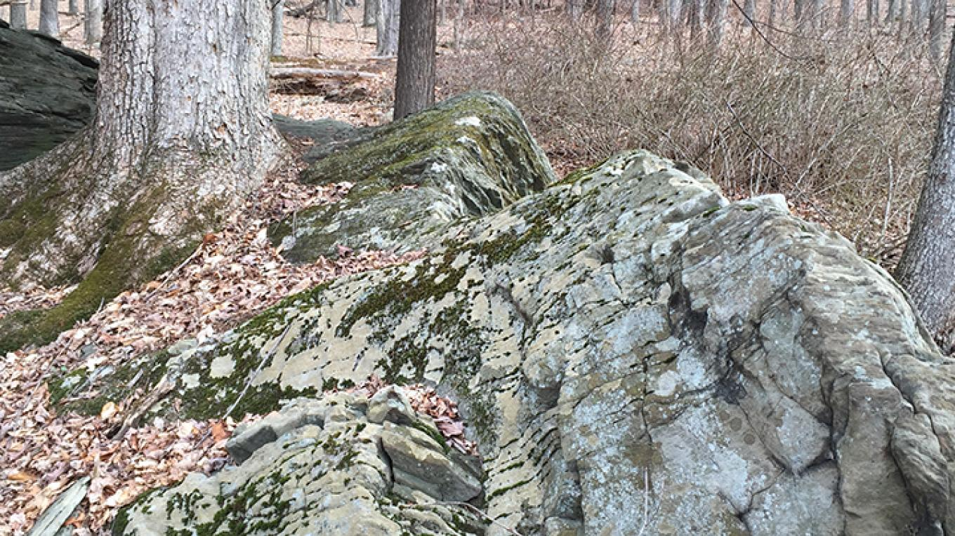 Rocks and trees live in harmony at Swiftwater Forest Preserve. – Carol Hillestad