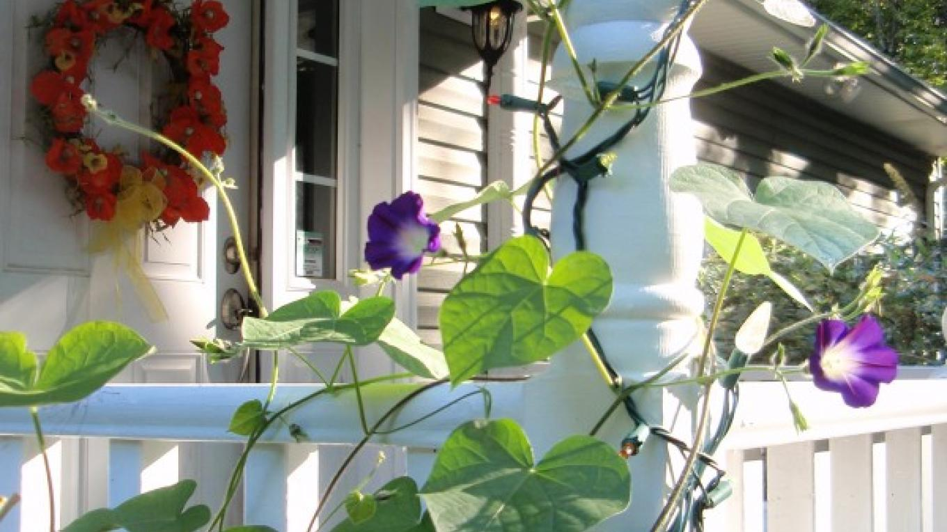 Welcome to Inn the Glen, with flowers to invite a hummingbird's visit – D. Davies