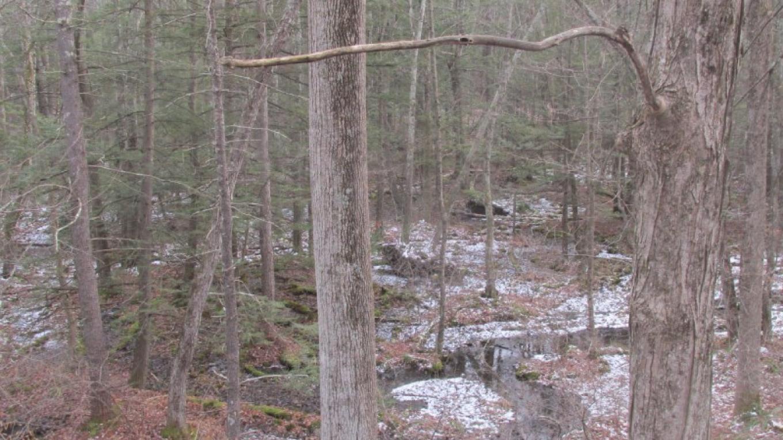 Winter scene in the Basha Kill east of the Wurtsboro turns. – Kerron Barnes
