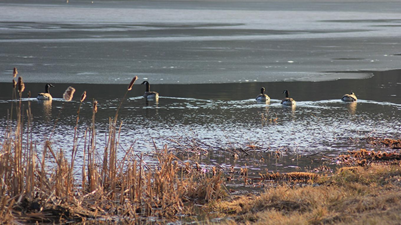 Canadian Geese at Hidden Lake. – National Park Service