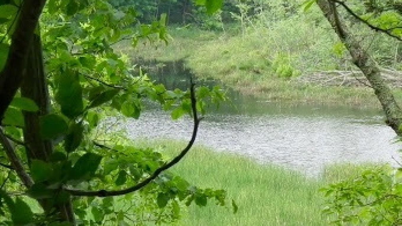 Early Summer - Vernal Pond – JoAnne Beliveau