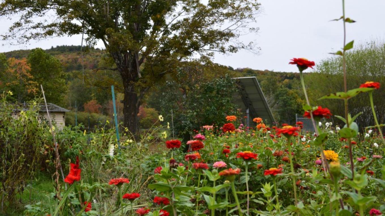 Garden in Summer – Anne Hart