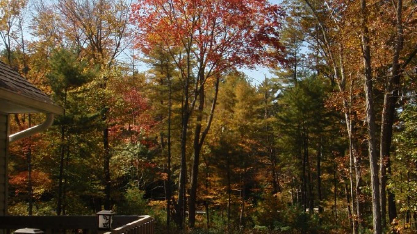 Gorgeous colors of fall – D. Davies