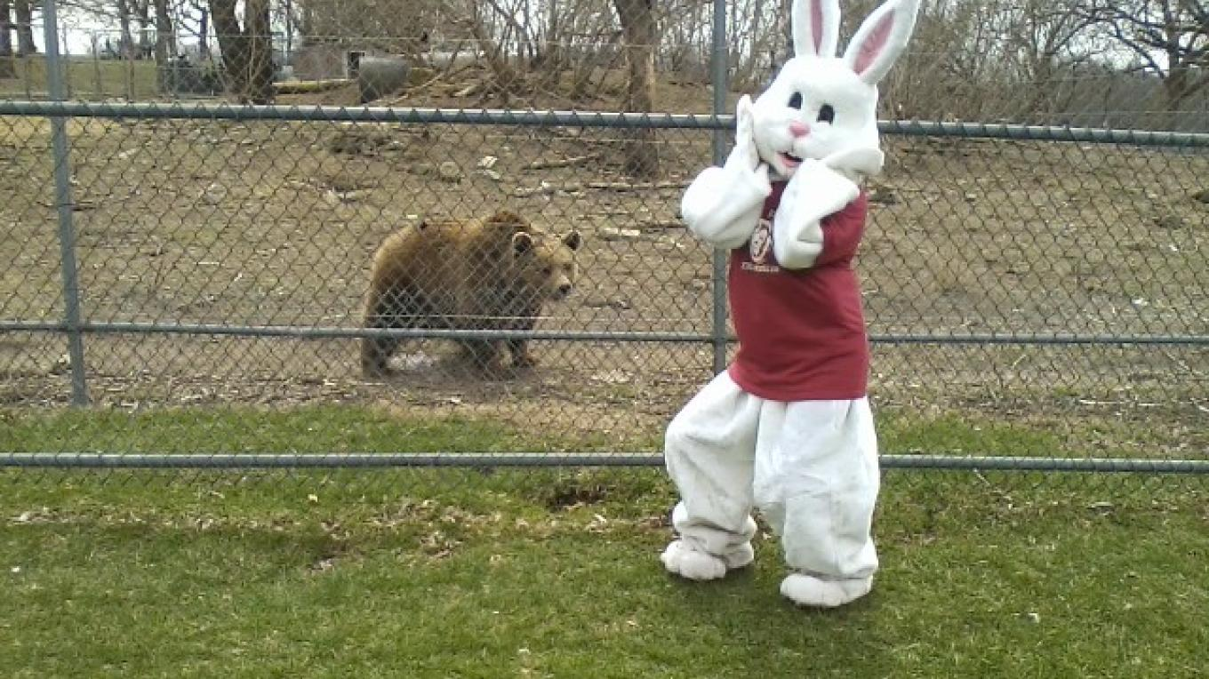 """Oh No"" says the Easter Bunny, ""I see a Syrian Grizzly bear!"" – Lori Space Day"