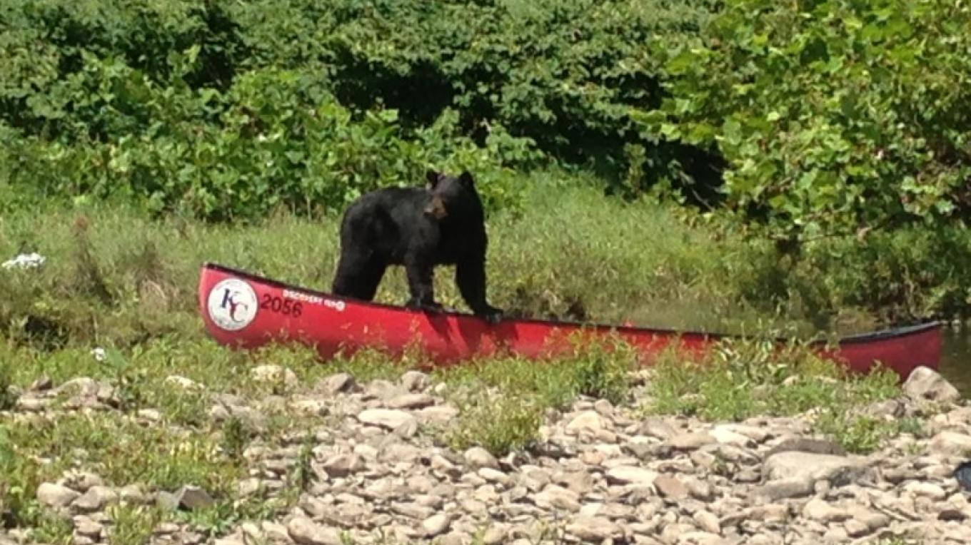 "Mr. KC Bear says ""Thank you for helping to keep our forests and rivers clean for all of my animal friends!"" – Photograph by: Kittatinny Canoes, Inc"