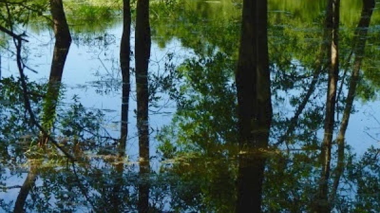 Spring- Seasonal Sinkhole Pond – JoAnne Beliveau