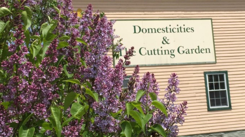 Domesticities & the Cutting Garden – Anne Hart